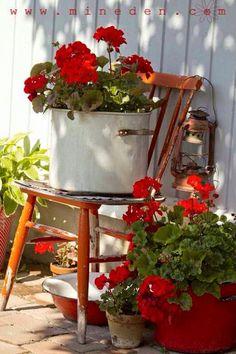 House plants geraniums in pots front porches ivy geraniums bouture geranium essie geranium g Red Cottage, Garden Cottage, Garden Art, Garden Design, Farm Cottage, Garden Junk, Cozy Cottage, Dream Garden, Cottage Style