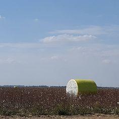 It's cotton harvesting time in the Arkansas Delta. #cotton #cottonbale #cottonharvest #phillipscounty #arkansasgrown #visitarkansas