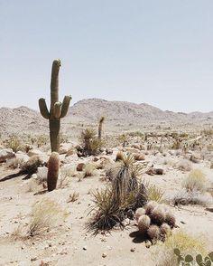 Desert Dreaams