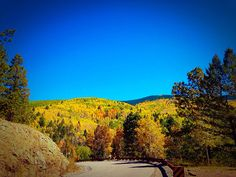 Beautiful golden aspen trees in Santa Fe National Forest  October 2014