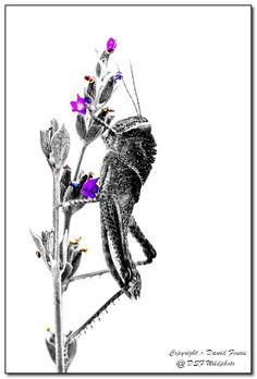Purple by Dawid Fourie on 500px