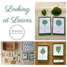 Free Leaf Shape Nomenclature Cards and Charts from Elementary Observations