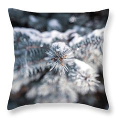 Nature Photography - Snowy Evergreen Throw Pillow for Sale by Amelia Pearn Photography Studio Spaces, Storm Photography, Couple Photography Poses, Autumn Photography, Underwater Photography, Artistic Photography, Macro Photography, Vintage Photography, Creative Photography