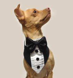 Pet Wedding Tuxedo Bandana For a Dog or a Cat on Etsy, $24.00