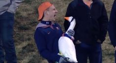 Announcers lose it watching a guy sing into a goose.