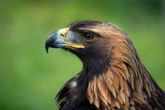 Photograph Eagle by Peter Orlický on 500px