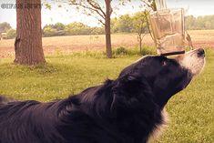 Perro sorprende con su habilidad { GIF } #asombroso #habilidades #perros