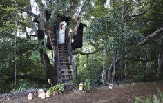 Tiny Home/Guest house/The tree house in Margaret's garden