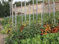 Fleurs, légumes, plantes aromatiques : les associations utiles au potager - E. Brenckle - Association au potager - Rustica