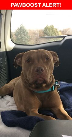 Is this your lost pet? Found in Carlisle, PA 17015. Please spread the word so we can find the owner!    Nearest Address: Rich Valley Road, Carlisle, PA