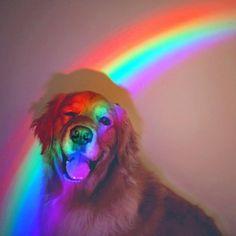 doggo source