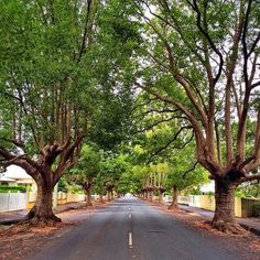 Beautiful tree lined street in the town of Toowoomba, Australia. I'm told it's up a mountain range.I love this, could live here. Queensland Australia, Australia Living, Town And Country, Country Roads, Places Ive Been, Places To Go, Shady Tree, Street Trees, Tree Line
