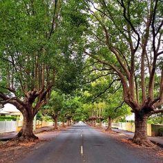 Beautiful tree lined street in the town of #Toowoomba, Australia. www.monashgroup.com.au