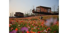 Pavilions and Skywalks Above a Field of Annual Flowers