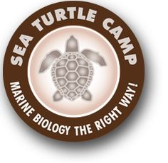 Marine Biology and SCUBA Camp - Sea Turtle Camp, Wilmington, NC. A marine science summer camp where teens gain hands-on experience with sea turtles. My Marine, Marine Life, Sea Turtle Species, Summer Camps For Teens, Scuba Certification, I Need Vitamin Sea, Marine Ecosystem, In The Zoo, Marine Conservation