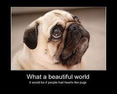 What a beautiful world it would be if people had hearts like pugs!  #pugs