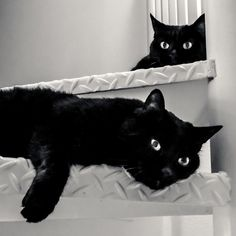 I see you in every black cat I  see
