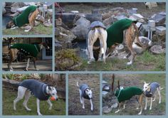 A custom whippet sweater order from Lively Loops.