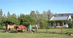 2nd honeymoon Horses, Holiday, Animals, Vacations, Animales, Animaux, Holidays, Animal, Animais