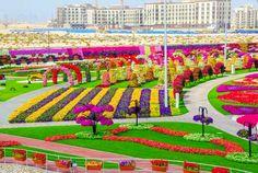 miracle garden dubai http://revista.floridelux.ro/cea-mai-mare-gradina-florala-din-lume-dubai/