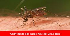 Dos nuevos casos relacionados con viajes del virus Zika se han confirmado en Nebraska Más detalles >> www.quetalomaha.com/?p=5604