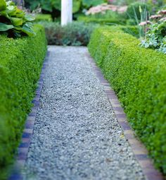 boxwood hedges outline the yard and better define the space.  Love the gravel path, very Euro feel.