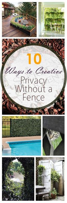 10 Ways to Create Privacy Without a Fence Living fence ideas, fence ideas, gardening, outdoor privac Outdoor Privacy, Backyard Privacy, Backyard Fences, Garden Fencing, Privacy Plants, Outdoor Curtains, Privacy Screens, Diy Fence, Fence Ideas