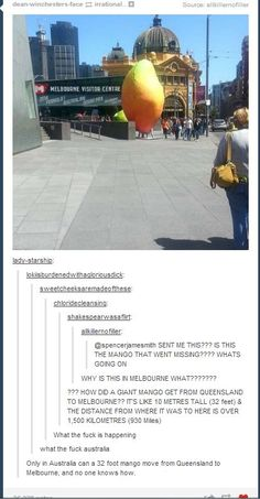 found the missing mango At this point I don't even believe in Australia.At this point I don't even believe in Australia. Australian Memes, Aussie Memes, Stupid Funny Memes, The Funny, Hilarious, Meanwhile In Australia, Australia Funny, Funny Tumblr Posts, I Laughed