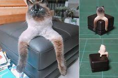 J'en peux plus de rire  #cat #chat #mdr #fun #funny Fun, Animals, Laughing, Cat Breeds, Animales, Animaux, Animal, Animais, Hilarious