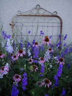 have the gate, need the flowers  PINK AND PURPLE;  Echinacea and Delphinium