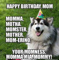 Animals tell short birthday jokes and funny Happy Birthday one-liners, hilarious pets send humor pun B-Day greetings. Short, but sweet, party memes to share with family and friends.