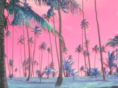 trippy palm trees