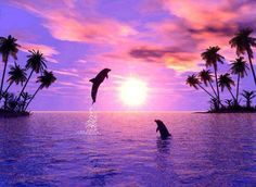 Pretty sunset on beach that has palm trees and two dolphins leaping in the air
