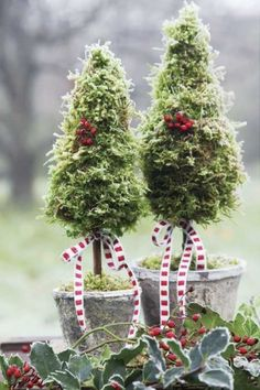 Pretty Christmas Topiaries (..I translated the Polish to English. I think I can get the jest of this pretty tree. :))