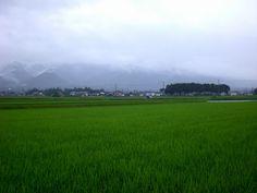 菰野町西菰野地区 本格的な雨 御在所岳等の山々はすっぽり雲の中。   平成24年7月1日夕刻撮影