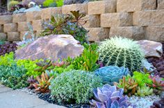 Easy Desert Landscaping Tips That Will Help You Design A Beautiful Yard Courtyard Landscaping, Succulent Landscaping, Landscaping Tips, Arizona Landscaping, Arizona Gardening, Outdoor Landscaping, Cacti And Succulents, Planting Succulents, Landscape Design