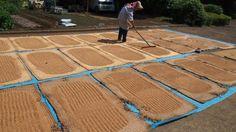 NPO 東久留米の水と景観を守る会のブログ: 文化遺産保全_柳久保小麦