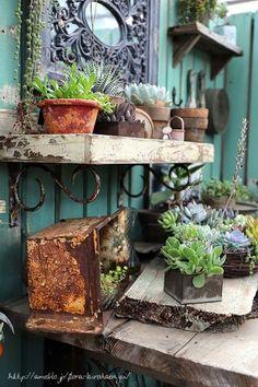 フローラのガーデニング・園芸作業日記-多肉植物 売り場 寄せ植え