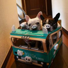 """""""Oink, oink, oink..."""", French Bulldogs in Piggy Noses, hilarious ; )"""