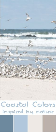 Coastal Wall Art -'Sanderlings Take Flight' by New Leaf Photography - Coastal…
