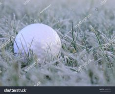 Find Golf Ball On White Frosen Grass stock images in HD and millions of other royalty-free stock photos, illustrations and vectors in the Shutterstock collection. Thousands of new, high-quality pictures added every day. Golf Ball, Grass, Photo Editing, Royalty Free Stock Photos, Illustration, Pictures, Image, Editing Photos, Photos