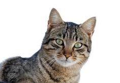 kedinin gözleri <33