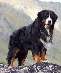 Joey the Handsome BMD