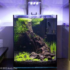 2012 AGA Aquascaping Contest - Entry #62