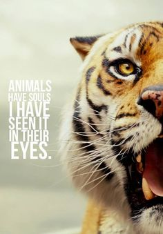 Couldn't agree more. This is a quote from the movie Life of Pi.