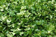 Herbs, Minden, Herb, Medicinal Plants