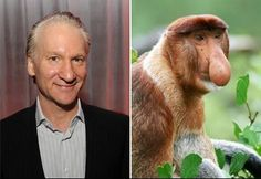 """Separated at birth? Bill Maher recently made some idiotic remarks about Donald Trump, topping it off by claiming that he'd donate $5 million if Trump could prove he's not the """"spawn of his mother mating with an orangutan."""" Strange coming from a guy who bears such a striking resemblance to a proboscis monkey. Just sayin.'"""