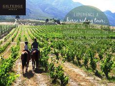 Cape Winelands   Horseback Riding