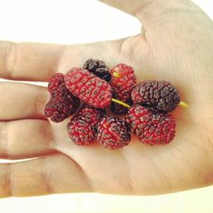 Mulberries. #fruit #mulberry