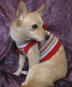 My name is Katherine Bigelow and I'm about 6-7 years old. I was in a breeding facility most of my life so I do have some fear issues, but I do go up to my foster Mom for pets now. I need a quiet home with a fenced yard so I can continue to grow and...